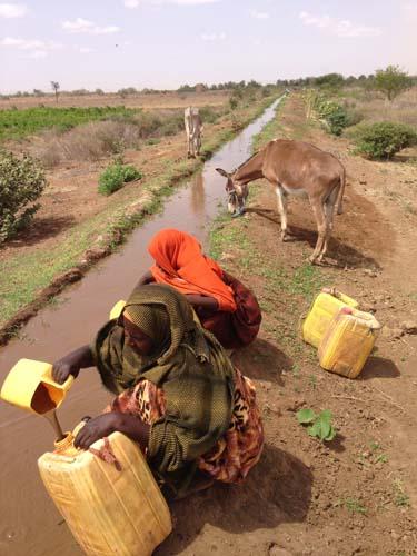 En este canal de riego, una mujer recoge agua mientras su burro bebe