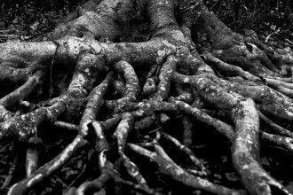 Fotografía de KellarW publicada en Flickr bajo licencia CC