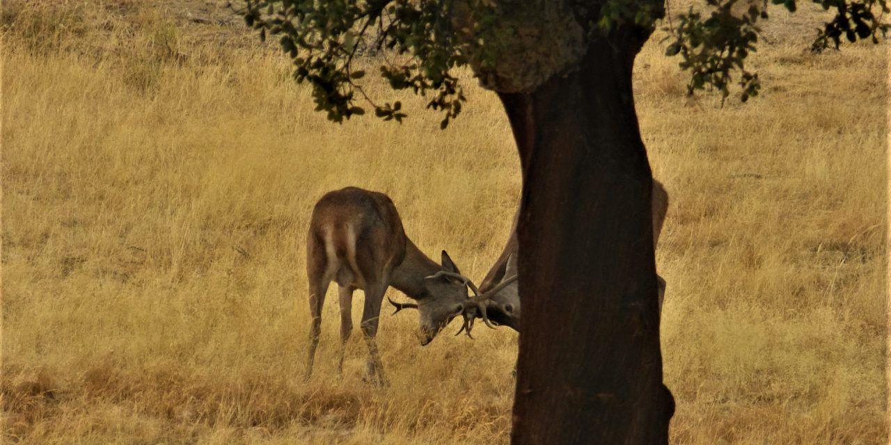 Agricultura y caza sostenible: por un beneficio social